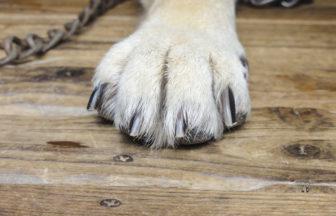 ペットが滑る床の危険性とは
