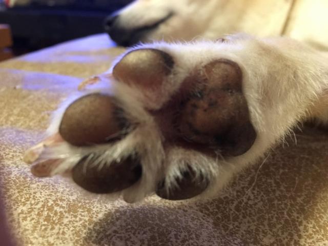 犬の臭いの発生源は?