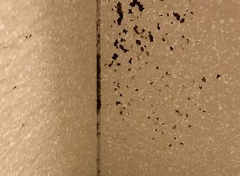 長野市内装壁紙クロス部屋カビ