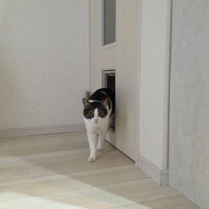 長野市 ペット用ドア